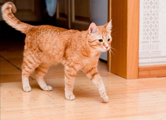 удаление запаха кошачьей мочи