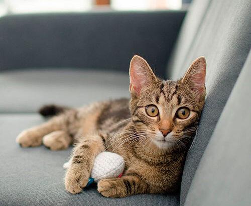 Химчистка дивана от кошачьей мочи