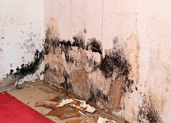 Удаление плесени на стенах