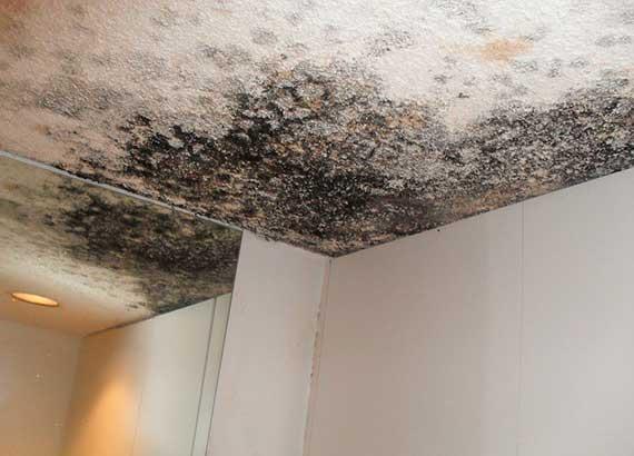 Удаление плесени на потолке